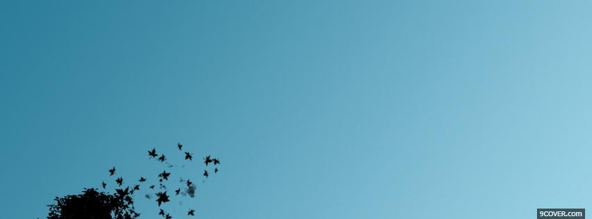 Photo birds and blue sky Facebook Cover for Free
