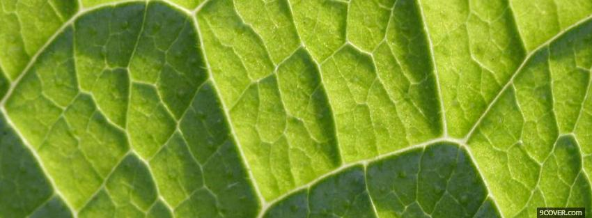 Photo green leaf close up Facebook Cover for Free