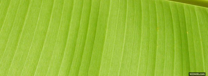 Photo lime green abstract line Facebook Cover for Free