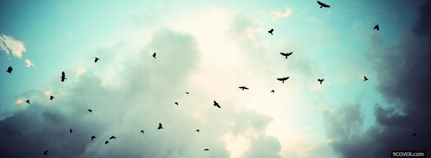 Photo birds flying in the sky Facebook Cover for Free