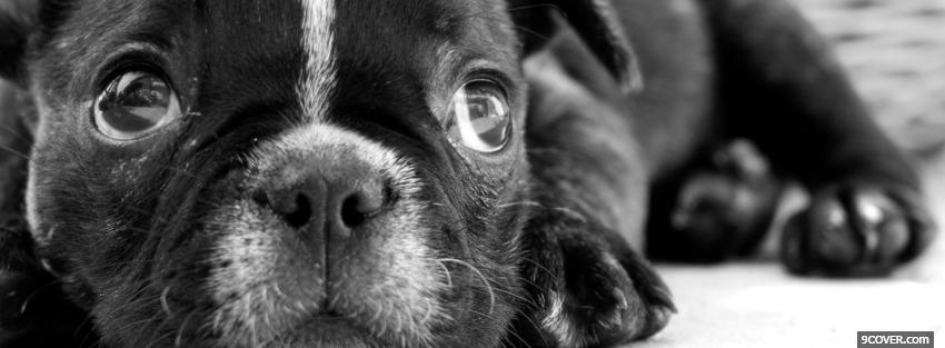 Photo black and white puppy Facebook Cover for Free