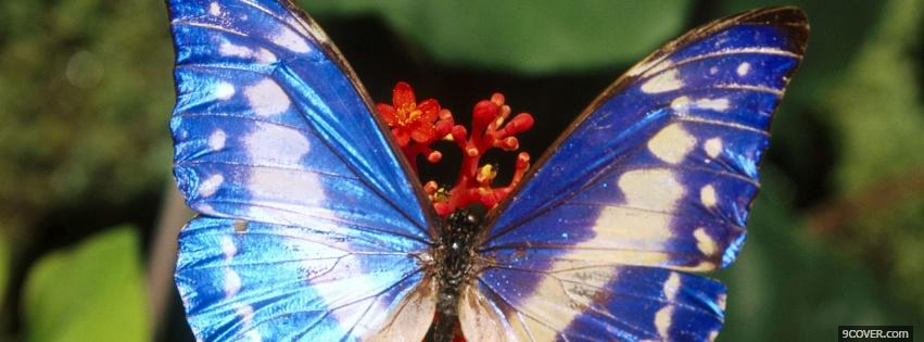 Photo blue and white butterfly Facebook Cover for Free