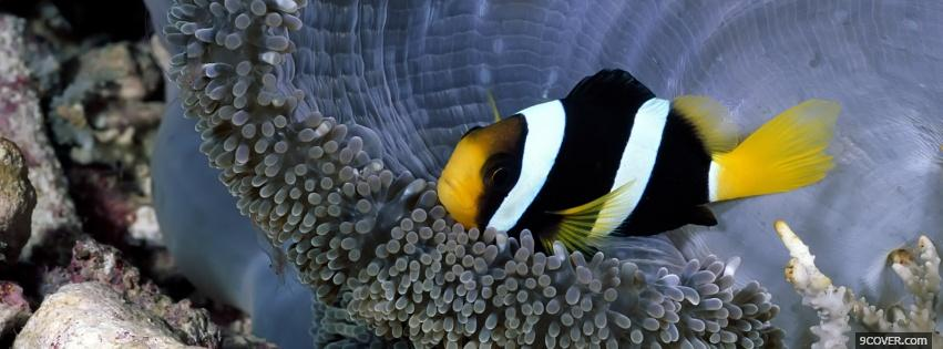Photo coral colorful fish animals Facebook Cover for Free