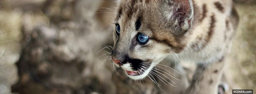 Photo cute cougar cub Facebook Cover for Free