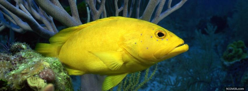 Photo yellow underwater fish Facebook Cover for Free
