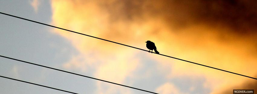Photo bird on a wire Facebook Cover for Free