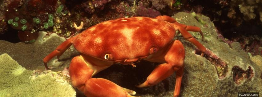 Photo underwater crab animals Facebook Cover for Free