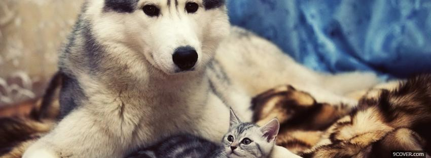 Photo adorable animals husky and kitty Facebook Cover for Free