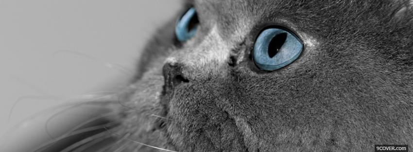 Photo blue eyes kitty animals Facebook Cover for Free
