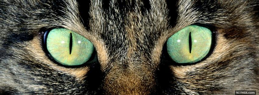 Photo piercing cat green eyes Facebook Cover for Free