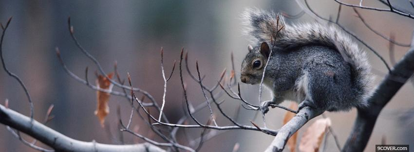 Photo squirrel on a branch Facebook Cover for Free