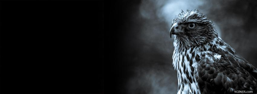 Photo black and white hawk Facebook Cover for Free
