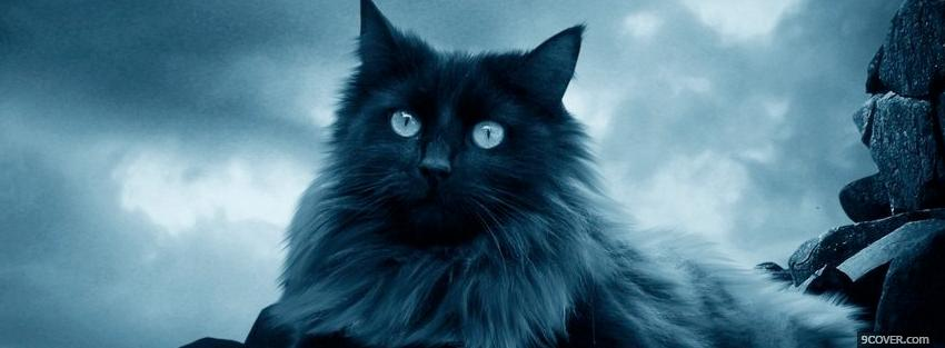 Photo dark cat outside animals Facebook Cover for Free