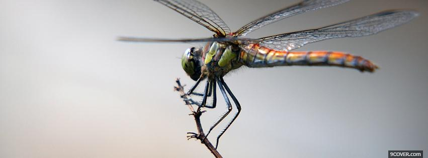 Photo dragon fly on a branch Facebook Cover for Free
