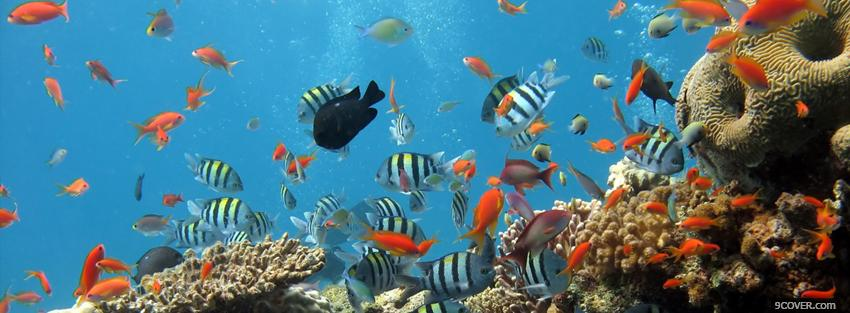 Photo fishes in the ocean animals Facebook Cover for Free