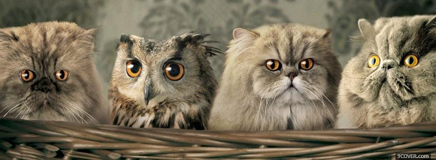 Photo cats with owl animals Facebook Cover for Free