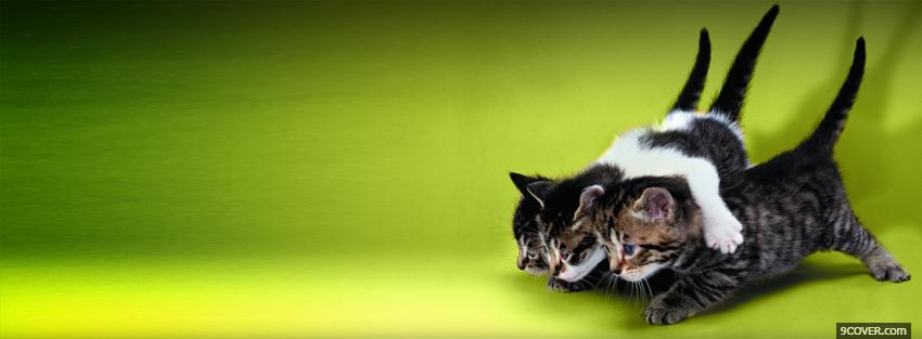 Photo cute little cats Facebook Cover for Free
