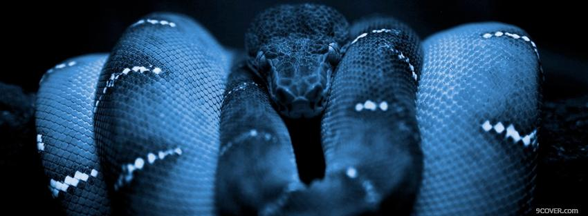 Photo scary animals snake Facebook Cover for Free