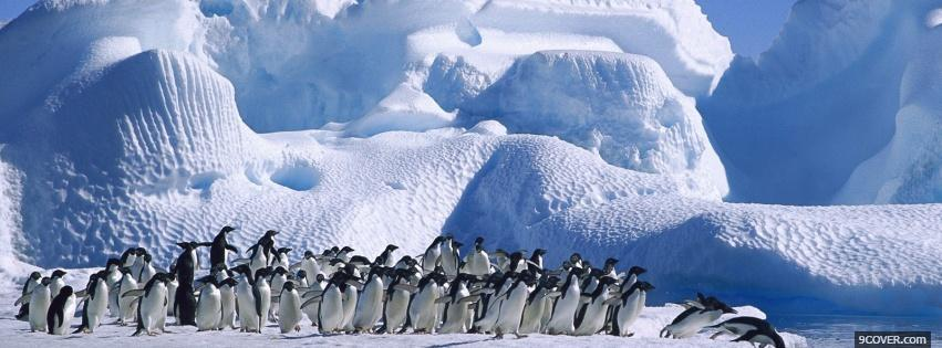 Photo animals population of penguins Facebook Cover for Free