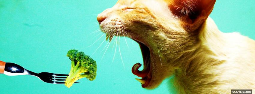 Photo cat eating veggies Facebook Cover for Free