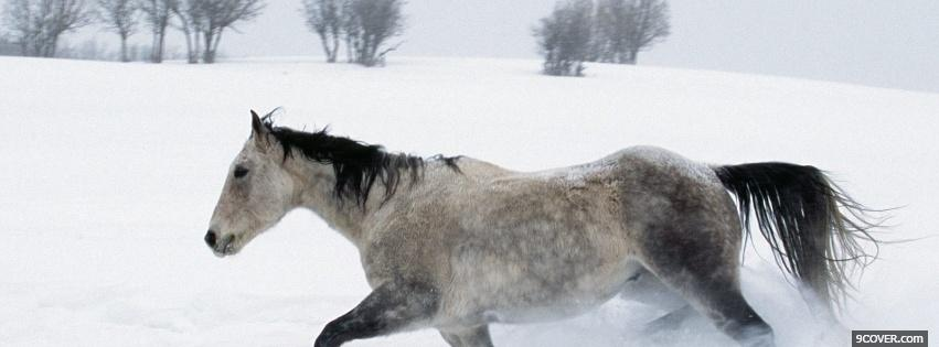 Photo horse in the snow animals Facebook Cover for Free