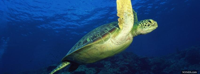 Photo marvelous turtle underwater Facebook Cover for Free