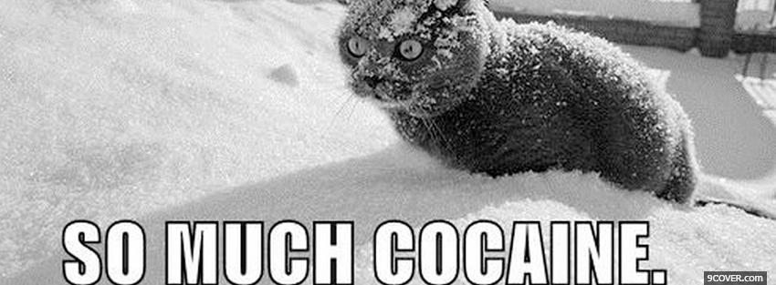 Photo so much cocaine animals Facebook Cover for Free