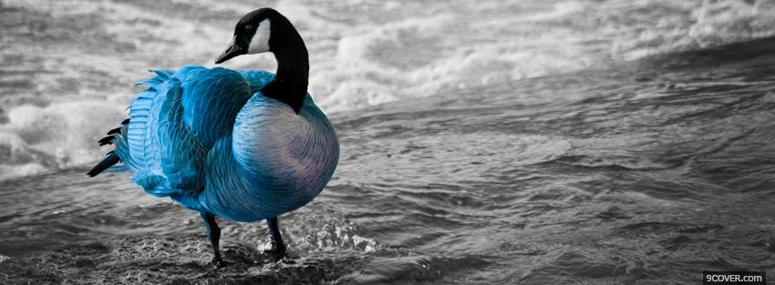 Photo animal in the water goose Facebook Cover for Free