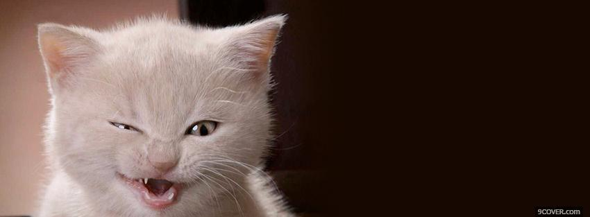 Photo cute baby kitten animals Facebook Cover for Free