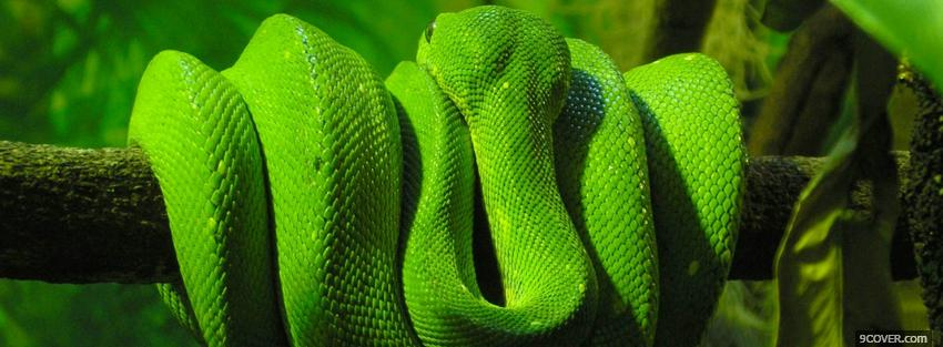 Photo green snake around a branch Facebook Cover for Free