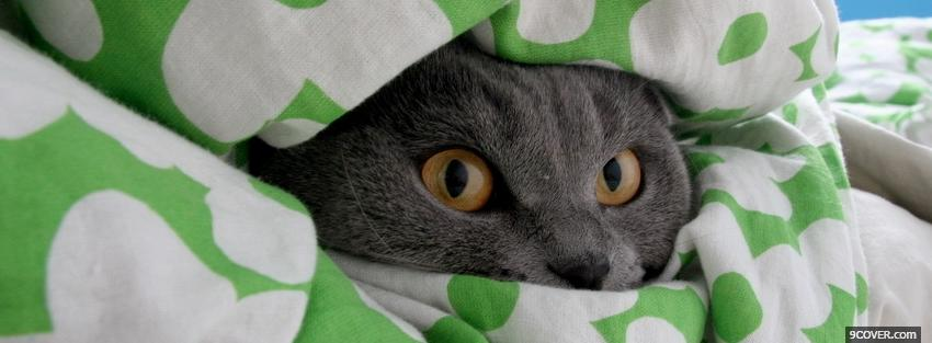Photo hiding cat animals Facebook Cover for Free