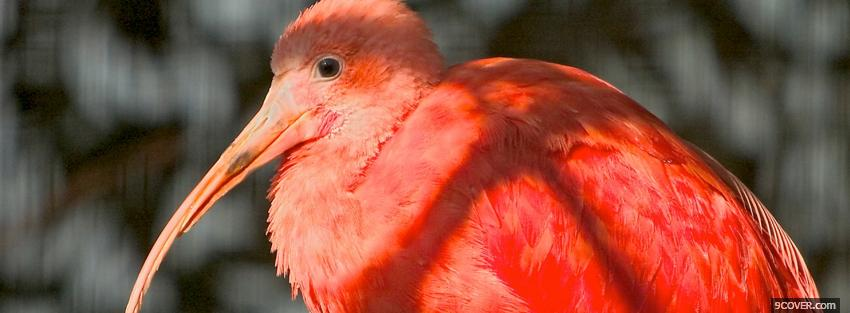 Photo red beautiful bird animals Facebook Cover for Free
