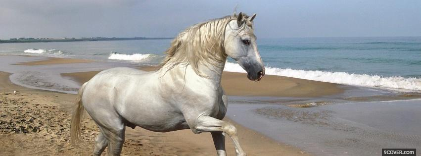 Photo white horse on the beach Facebook Cover for Free