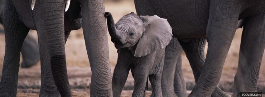 Photo baby elephant with animals Facebook Cover for Free