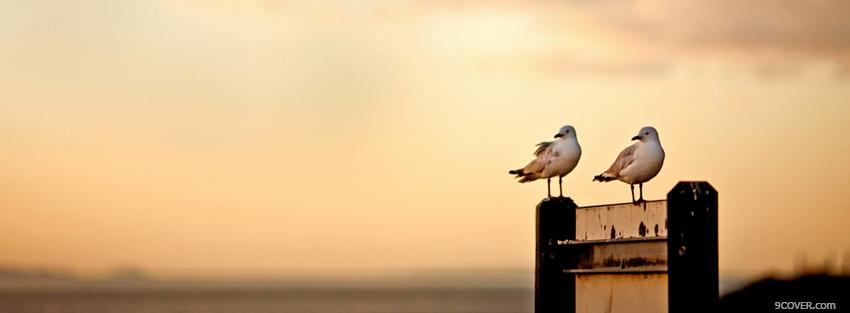 birds in the sunset animals photo facebook cover