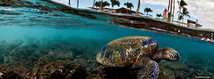 Photo turtle in the sea Facebook Cover for Free