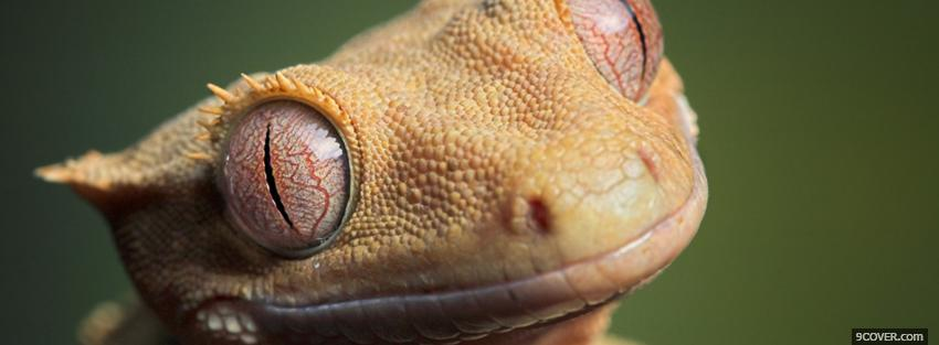 Animals Crested Gecko Photo Facebook Cover