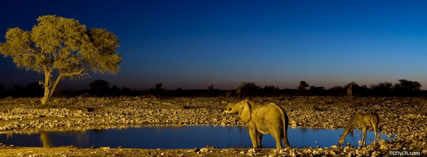 Photo animals girafes and elephants Facebook Cover for Free