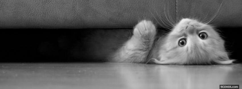 Photo cute cat under the sofa Facebook Cover for Free