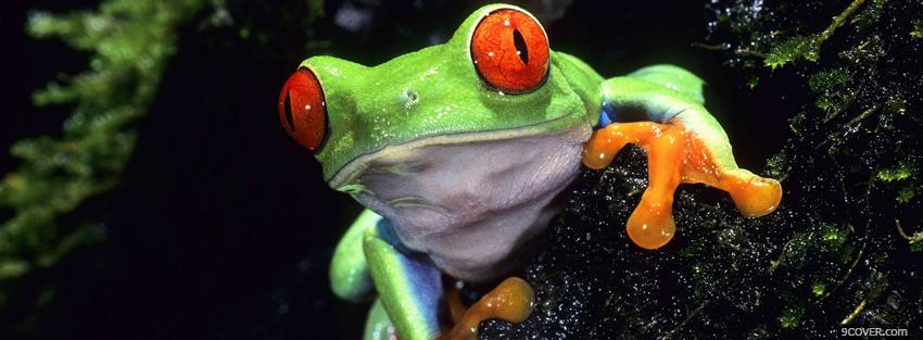 Photo red eyed tree frog animals Facebook Cover for Free