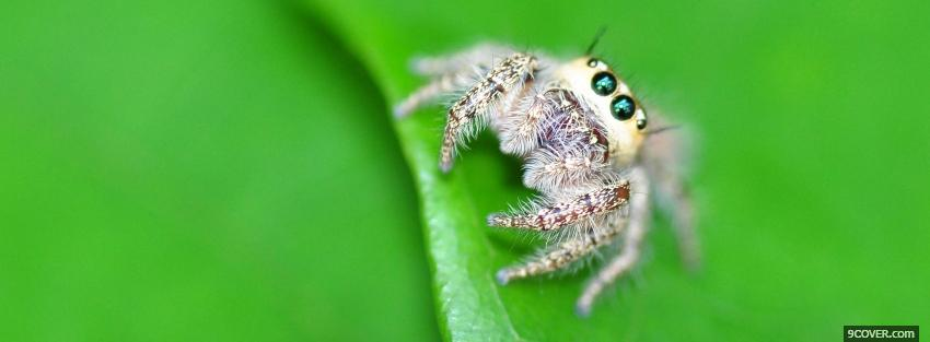 Photo spider on a leaf animals Facebook Cover for Free
