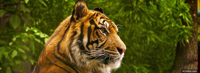 Photo beautiful animal tigre Facebook Cover for Free