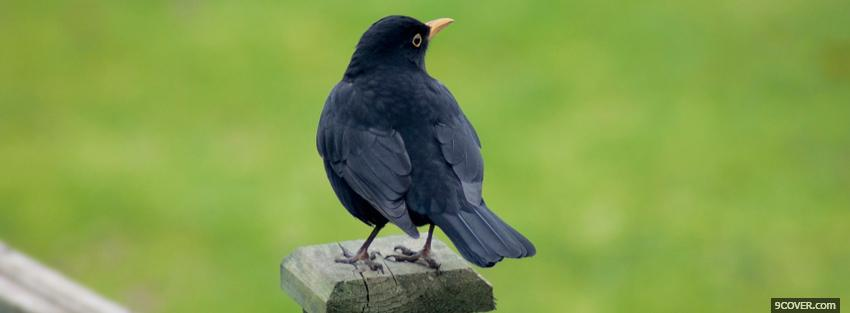 Photo black birdy outside Facebook Cover for Free