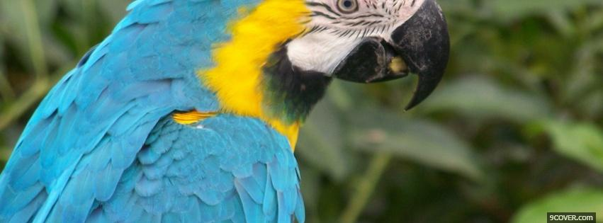 Photo blue and yello parrot Facebook Cover for Free