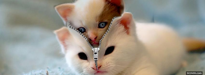 Photo cat in cat costume animals Facebook Cover for Free