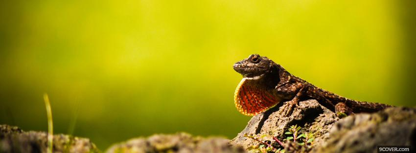 Photo animals reptile outside Facebook Cover for Free