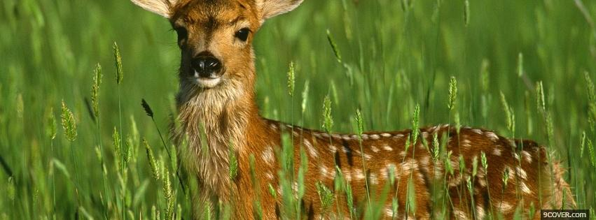 Photo deer in the grass animals Facebook Cover for Free