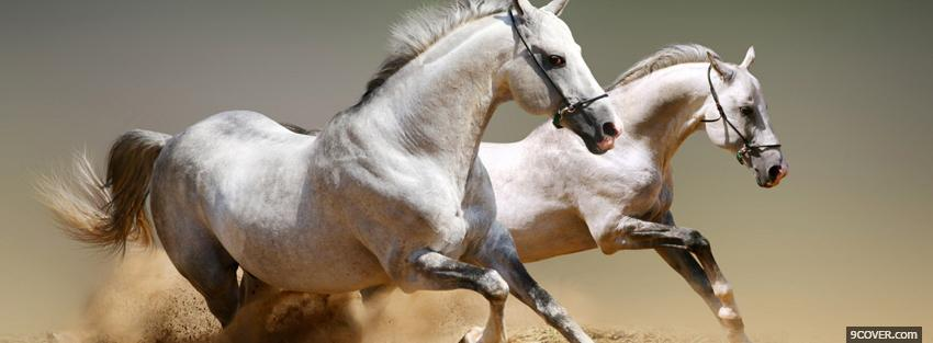 Photo white horses running Facebook Cover for Free