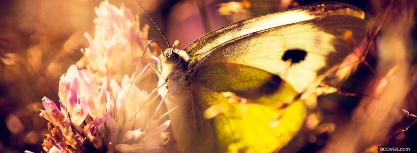 Photo butterfly on a flower Facebook Cover for Free