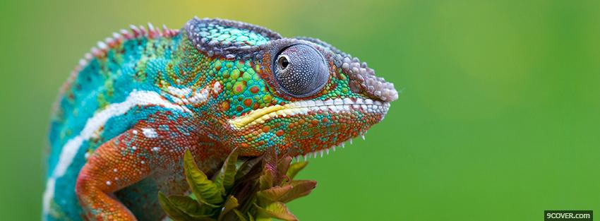 Photo colorful chameleon Facebook Cover for Free